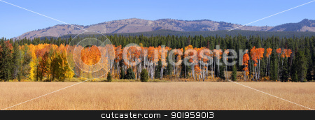 Autumn Panorama stock photo, Panoramic view of autumn trees in Yellowstone national park by Sreedhar Yedlapati