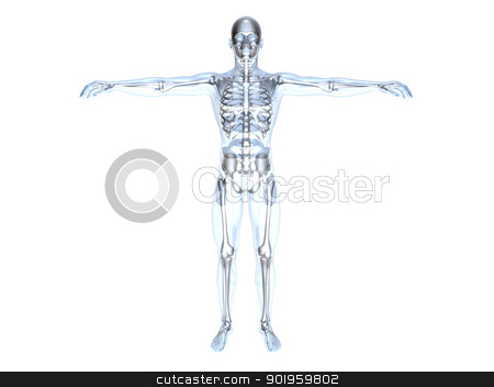 Anatomy - X-Ray stock photo, 3D rendered Illustration. by Michael Osterrieder