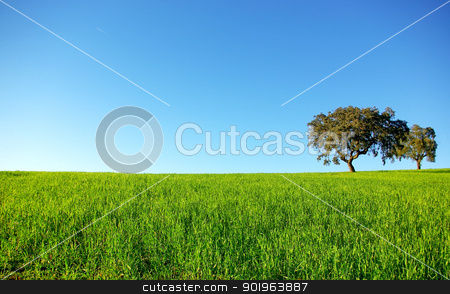 Oak trees in a wheat field. stock photo, Oak trees in a wheat field at Portugal. by Inacio Pires