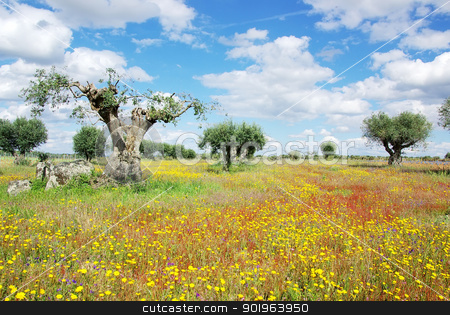 Old olives tree at portuguese field stock photo, Old olives tree at portuguese field by Inacio Pires