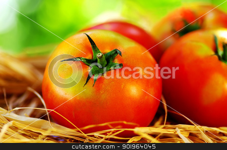 Ripe tomatoes  stock photo,  closeup of Ripe tomatoes by Inacio Pires