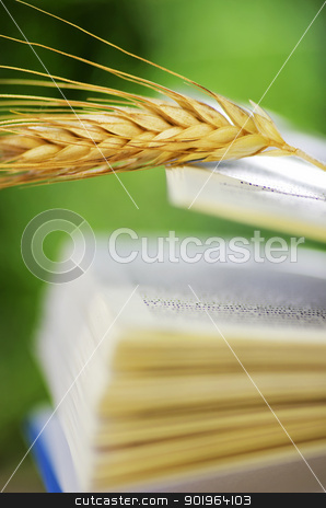 wheat spike on open book stock photo, wheat spike on open book by Inacio Pires