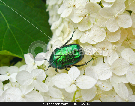 The motley green bug on the white leaves stock photo, The beautiful motley bug has hidden on the white leaves by Alexander Matvienko