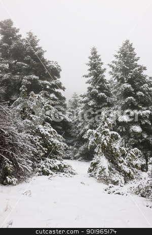 Narrow path in pine forest under snow stock photo, Narrow path in a snow pine forest in Arcadia, Greece by Andreas Karelias
