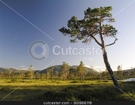 Nature Landscape stock photo, Beautiful landscape of mountain trees by Ingvar Bjork