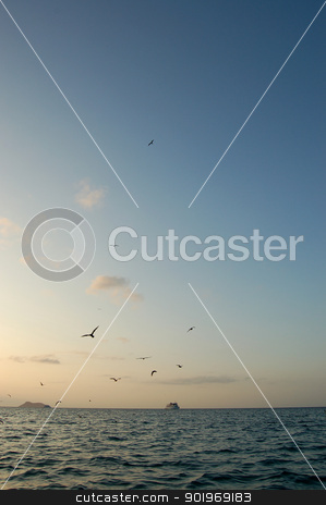 Birds above the Pacific Ocean stock photo, Sea birds flying above the water in the Galapagos Islands with a boat on the horizon by Sarah Marchant