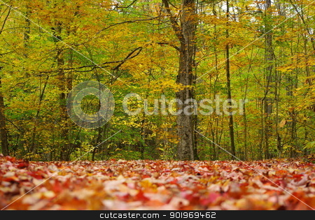 Fall Foliage in Vermont stock photo, Fall foliage in a Vermont park. by Amanda Perkins