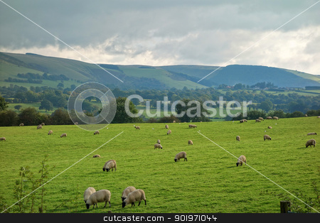 Wales countryside fields and hills, sheep grazing. stock photo, Wales countryside fields and hills, sheep grazing. by Stephen Rees
