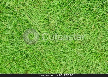 Long green uncut grass close up. stock photo, Long green uncut grass close up. by Stephen Rees