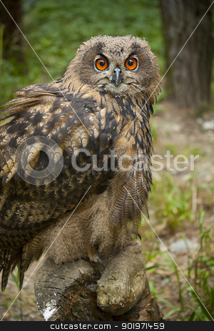 Owl bird stock photo, Owl in the chump, in green grass background by Grafvision
