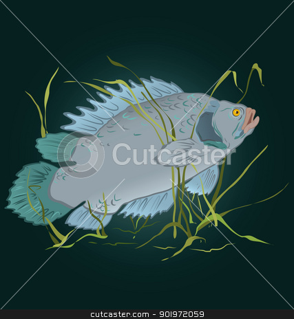 Fish in seaweed  vector stock vector clipart, Vector illustration of gray fish swimming in seaweed  by Zebra-Finch