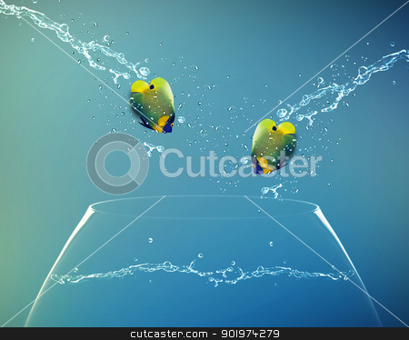 Angelfish jumping to other bowl stock photo, Angelfish jumping to other bowl, Good Concept for new love, freedom, liberty, independence, unrestraint, new Opportunity and challenge concept. by Designsstock