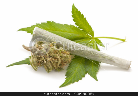 Hemp (cannabis) stock photo, marijuana cigarette and green Leaf Isolated on white background   by luiscar