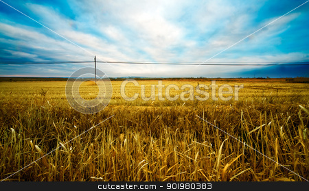 Wheat fields stock photo, Wheat fields landscape and blue sky by carloscastilla