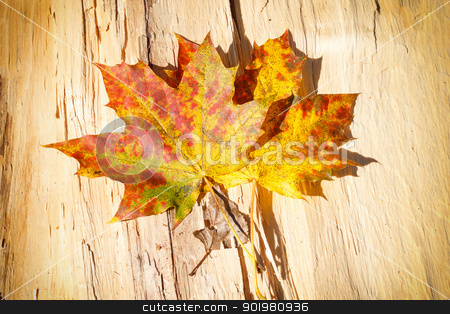 Autumn Leaves over wooden background stock photo, composition of autumn Leaves over wooden background by Artush