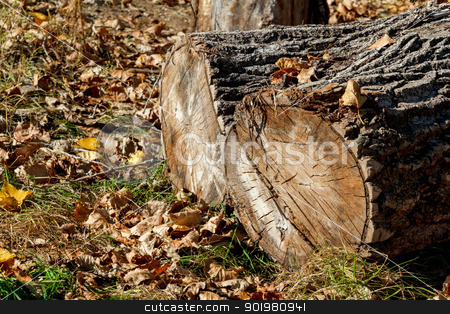 block of wood and autumn foliage stock photo, block of wood and autumn foliage for background use by Artush