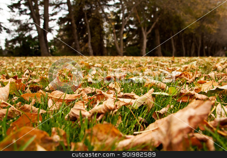 Autumn Leaves On The Ground stock photo, Dry autumn leaves on the green grass by Rachel Duchesne