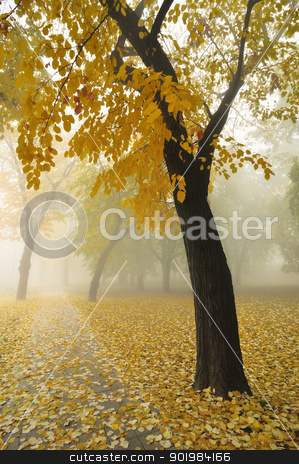 Autumn Maple Tree stock photo, Autumn Morning Fog in Park with Yellow Maple Tree by zagart
