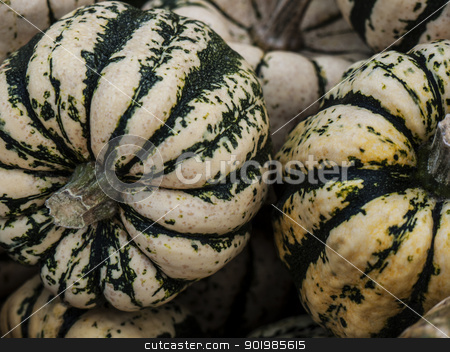 Pumpkin-Sweet-Dumpling-green stock photo, Pumpkin - a wonderful vegetable in autumn, which comes in many variations, here the variety Sweet Dumpling by Heike Jestram