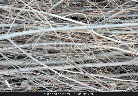 Dead Branches stock photo, A background of dead branches. by Michael Osterrieder