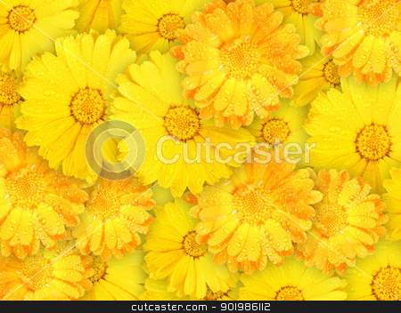 Background of orange and yellow wet flowers stock photo, Abstract background of orange and yellow wet flowers for your design. Close-up. Studio photography. by Andrey Khritin