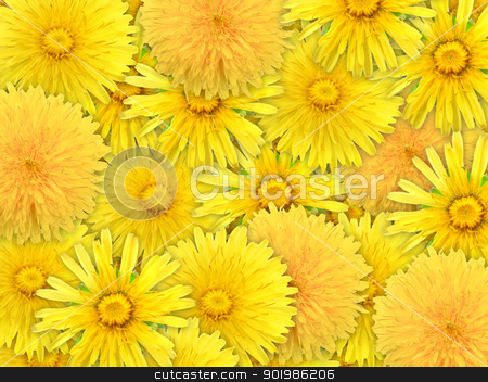 Abstract background of yelow flowers stock photo, Abstract background of yelow flowers for your design. Close-up. Studio photography. by Andrey Khritin