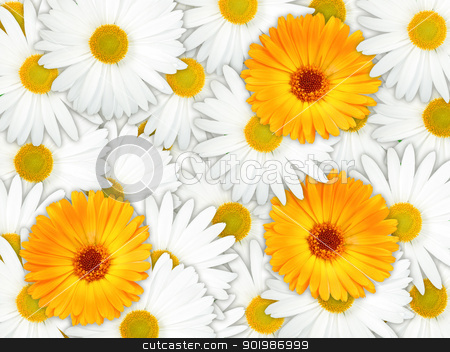 Background of orange and white flowers stock photo, Abstract background of orange and white flowers for your design. Close-up. Studio photography. by Andrey Khritin
