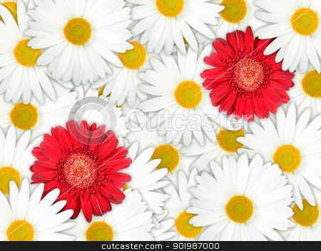 Background of red and white flowers stock photo, Abstract background of red and white flowers for your design. Close-up. Studio photography. by Andrey Khritin