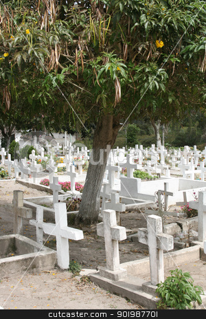 Crosses in an Ecuadorian Cemetery stock photo, White crosses in an Ecuadorian Catholic Cemetery with a fruit tree in Cotacachi, Ecuador by Robert Hamm