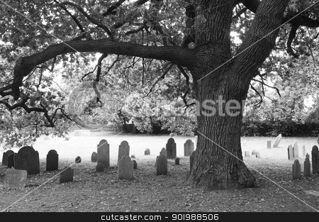 Tree and headstones stock photo, Old oak tree and headstones in Salem, Massachusetts' Old Burying Ground cemetery. by Andrea Thornberg