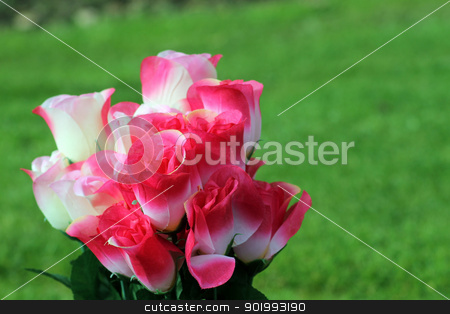 Pink and white flowers stock photo, Pink and white flowers in bloom with green nature background. by Martin Crowdy