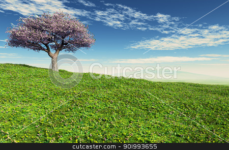 Cherry Tree stock photo, This image shows a cherry tree with meadow by kirschner