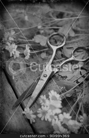 flowers with scissors stock photo, vintage paper textures with garden flowers and old antique scissors by klenova