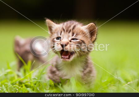 kittens stock photo, two kittens playing in the grass by digidreamgrafix.com