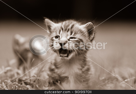 kittens stock photo, two kittens playing in the grass by alex grichenko