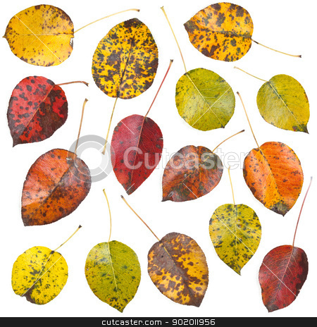 leaves set stock photo, Leaves set isolated on white background  by Grafvision