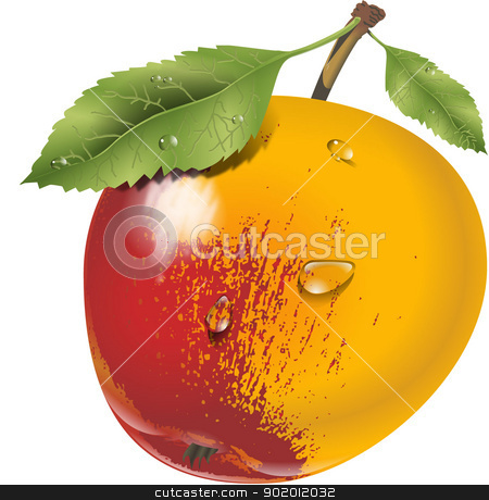 apple stock vector clipart,  by STAR ILLUSTRATION