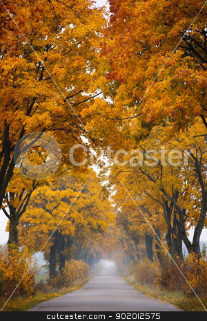 Fall road. stock photo, Autumn - road with colorful, vibrant maple trees. Fall in Poland. by Piotr Skubisz