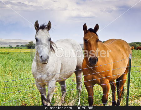 Two Horses, One Brown, One White  stock photo, Two horses stand at wire fence hoping to get free by emattil