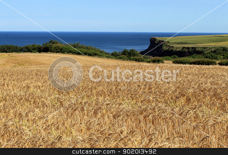 Corn field by blue sea stock photo, Scenic view of golden corn field in countryside with blue sea in background. by Martin Crowdy