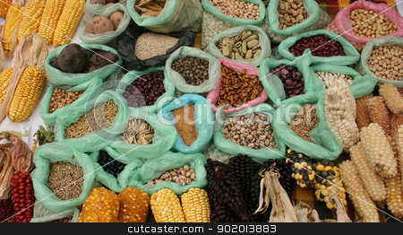 Beans Corn and Potatoes stock photo, Sacks of different varieties of beans, corn and potatoes are some of the vegetables for sale at the outdoor food market in Cotacachi, Ecuador by Robert Hamm