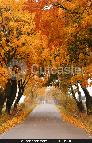 Autumn maple road. stock photo, Autumn - road with colorful, vibrant maple trees. Fall in Poland. by Piotr Skubisz