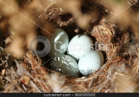 Bird Eggs Nest stock photo, Close up shot of four birds eggs in a nest. by Henrik Lehnerer
