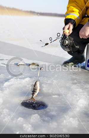 Ice Fishing stock photo, man ice fishing for the perch fish  by photomim