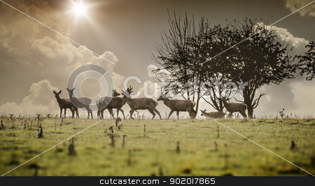 deer stock photo, An image of a some nice deer in the morning light by Markus Gann