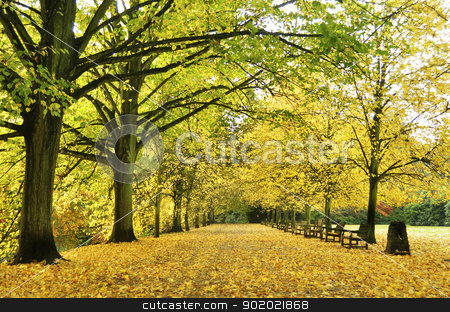 autumn alley stock photo, Beautiful autumn yellow lane in the forest good for wallpaper  by Tudor Antonel adrian