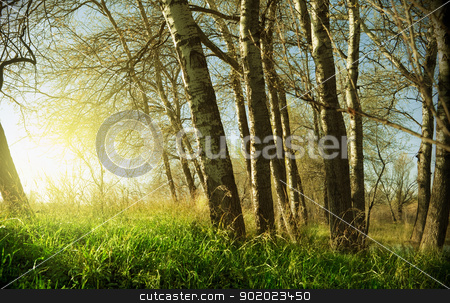 sunset and trees stock photo, Close shot of sunset and trees by carloscastilla