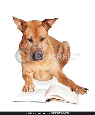 Dog in glasses stock photo, Dog in glasses reads book. Isolated over white. by Yulia Chupina