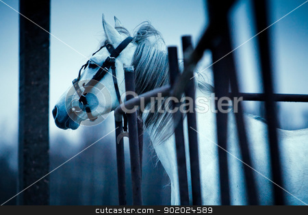 Sad horse stock photo, Sad horse looking afar. Photo in dark blue tones. by Yulia Chupina