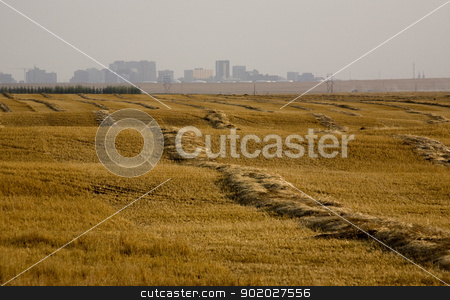 Harvest Swathes stock photo, Harvest Swathes with City of Regina Saskatchewan by Mark Duffy